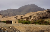 Oman, Masirah-Island_Wueste-Oase