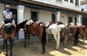Spanien_Andalusien_Rocio_Wallfahrt_Pfingsten_Pferde
