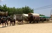 Spanien_Andalusien_Rocio_Wallfahrt_Pfingsten_Pferde_Karavane