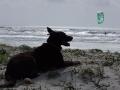 italien-sardinien-suedwest-portopino_dog-aisha-kitebeach
