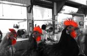 marokko-fes-souk-huehner-hahn-fleischmarkt