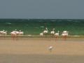 marokko-dakhla-duna-blanca_flamingos-e1349614720840