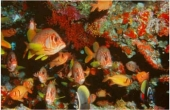 papuanewfishshoal