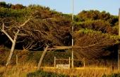 portugal_guincho_starker-wind_pinien