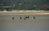 portugal_mitte_obidos_lagoa_fischer-men_seefood