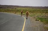 Oman, Masirah-Island_Wueste_Kamele-Strasse