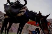 marrokko-nhatlas-mgoun-bike_muli-1