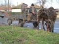 romaniaalexandriahorses