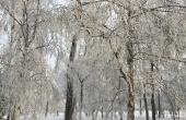 RealschuleTraunreut_Pasch-BerufUmwelt_Sibirien-Wald-Frost