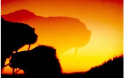 Oase Siwa: Mit dem Kamel bis ans Ende der Welt